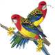 Parrots from !       Eric - PD Cpt.-Thx Mystical to !'!'!' Dr.H.Ilham Patu,SpBS !'!'!'