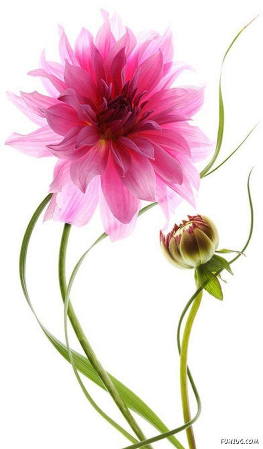 Lule dhe vetëm lule! - Faqe 2 3l_OIFTNs4hLYA_io77h1qpCw72Uxoq7NtNMFiWmaqxD2osmr9awWQ==