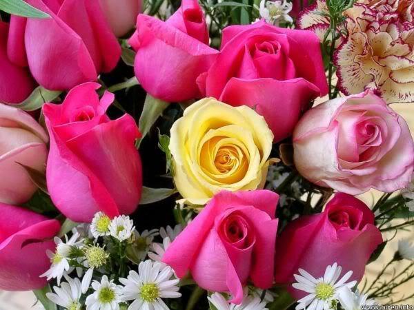 Lule dhe vetëm lule! BYVjBlA6zlqLYqJdbaSnz57Eb68QZiyHGKTAEN5nhaFdRGg-vvQ_dw==