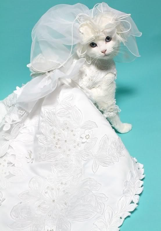 صور قطط جميلة Q5utLxceK2hdEOCikCJf1pzfKFrv6MkChtZ_L3D0cZ7NMCVd0LMZtg==